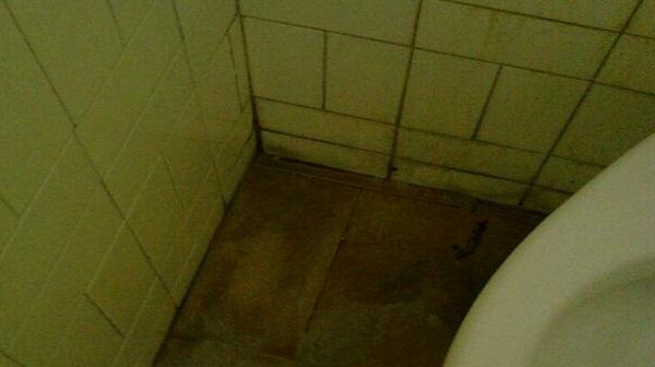 Lo scempio bagni sporchi e a rischio nella palestra della scuola alla merc dei bambini - Tette bagno scuola ...