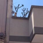 gatto salvato in via romagna (5)