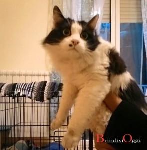 gatto col neo cerca il padrone brindisi 2