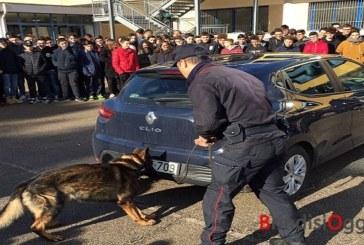 Incontro studenti carabinieri,  prova pratica con un cane antidroga