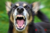 Aizza quattro cani contro i carabinieri per evitare la perquisizione, arrestato 44enne