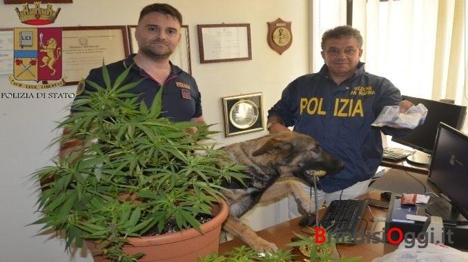 Piante di marijuana sul terrazzo condominiale di una palazzina al ...